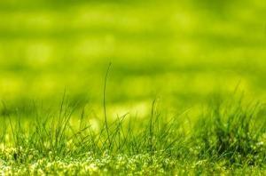 Jak pielęgnować nasz ogród