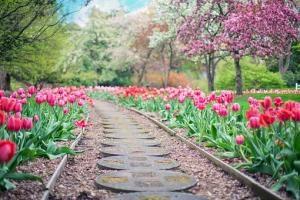 Jak samodzielnie zaprojektować ogród