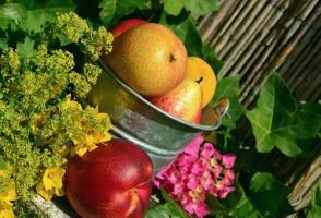 Ogród ubrany w zapach