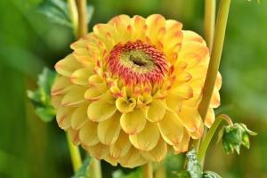 Uprawa roślin kwiatowych