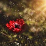 Mikoryza a wzrost roślin