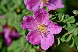 Ogród a rośliny doniczkowe