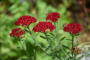 Ogród przyjazny alergikowi