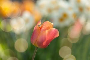 Garden-Design – M.M.Zawojscy