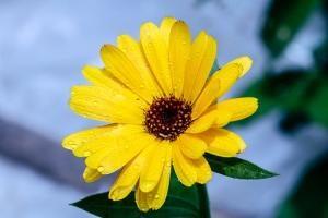 Samopodlewające rośliny doniczki