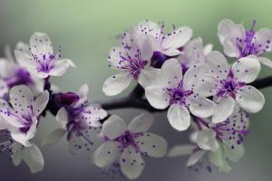 Zadbaj o ogród wiosną