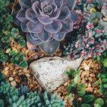 Projekt ogrodu jak z obrazu