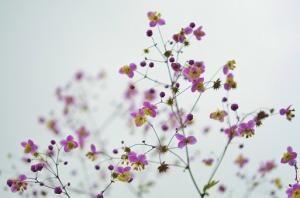 Przesyt kwiatów w ogrodzie