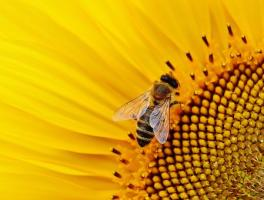 Mrówkowy problem ogrodników