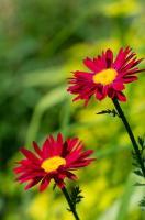 Odpowiednie rośliny do ogrodu