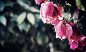 Jak się pozbyć suchych liści?