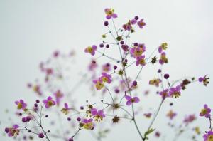Co daje posiadanie ogródka działkowego?