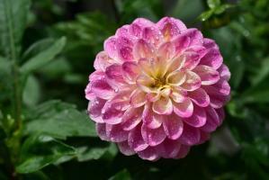 Ogród – kopia natury