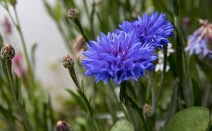 Wykonanie ogrodu -  samodzielnie czy zlecić?