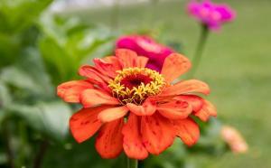 Owocowe i kwitnące rośliny